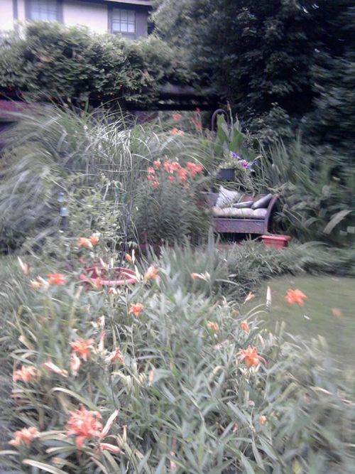 Tiger lilies 2