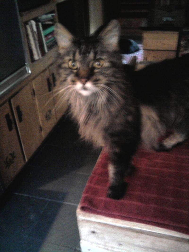 Aida in kitchen 2