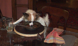 Simone_emptying_plate_2
